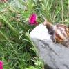 Comment se occuper d'un bébé escargot de jardin