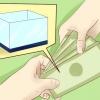 Comment maintenir des aquariums d'eau salée