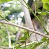 Comment faire un arc de bois vert