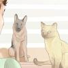 Comment faire un chat et un chien se entendent