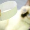 Comment faire un chapeau conique pour un chat