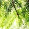 Comment faire un jardin forestier