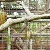 Comment faire un nichoir pour un perroquet