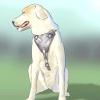 Comment faire une ceinture de sécurité pour votre chien