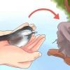 Comment faire de bébé de sauvetage des oiseaux alimentaire