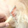 Comment faire de fils de chien