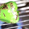 Comment faire des spaghettis vertes