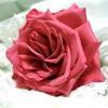 Comment faire des perles de pétales de rose