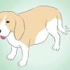 Comment se assurer que votre chien est ok après l'accouchement