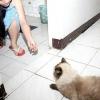 Comment faire de votre chat fourrure douce et brillante