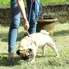Comment faire de votre chien à rester dans votre cour sans laisse
