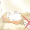 Comment faire de votre hamster confiance en vous