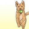 Comment faire de votre labrador retriever heureux