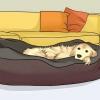Comment faire de votre petit chien un tour de chien câlin