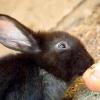 Comment faire votre lapin comme vous