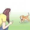 Comment mesurer le taux de respiration d'un chien