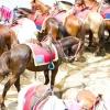 Comment répondre à un cheval pour la première fois