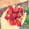 Comment faire un thé l'après-midi avec des fraises
