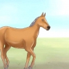 Comment nommer un cheval