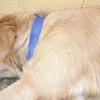 Comment soigner un chien à travers parvo