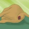 Comment observer la naissance d'un veau