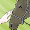 Comment caresser un cheval