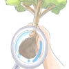 Comment planter un arbuste