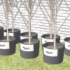 Comment planter des arbres fruitiers