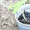 Comment planter dans des sols pauvres