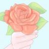 Comment planter des roses