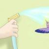 Comment jouer avec un colibri