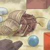 Comment jouer avec votre crabe ermite
