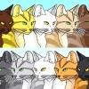 Comment positionner vos guerriers chats de clan