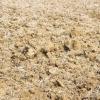 Comment préparer le sol pour planter des herbes