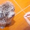 Comment faire pour empêcher un chien de porte de chargement