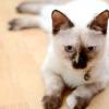 Comment faire pour empêcher les chats de se gratter