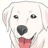 Comment prévenir la dysplasie de la hanche chez les chiens
