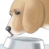 Comment prévenir la gale chez les chiens