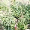 Comment empêcher les mauvaises herbes de jardin de légumes