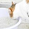Comment empêcher votre bac à litière de votre maison puante