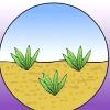 Comment propager une plante d'aloe vera