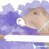 Comment abattre une vache correctement selon la méthode casher shechitah