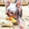 Comment protéger le mobilier des chiens