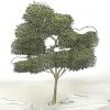 Comment tailler un arbre fruitier