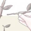 Comment tailler les plantes d'intérieur