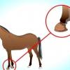 Comment mettre des bottes de cloche sur un cheval
