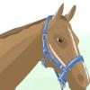 Comment mettre sur le tapis d'un cheval de / poney