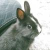 Comment élever un lapin comme animal de compagnie