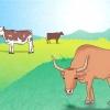 Comment élever du bétail