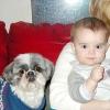Comment élever des enfants avec des chiens